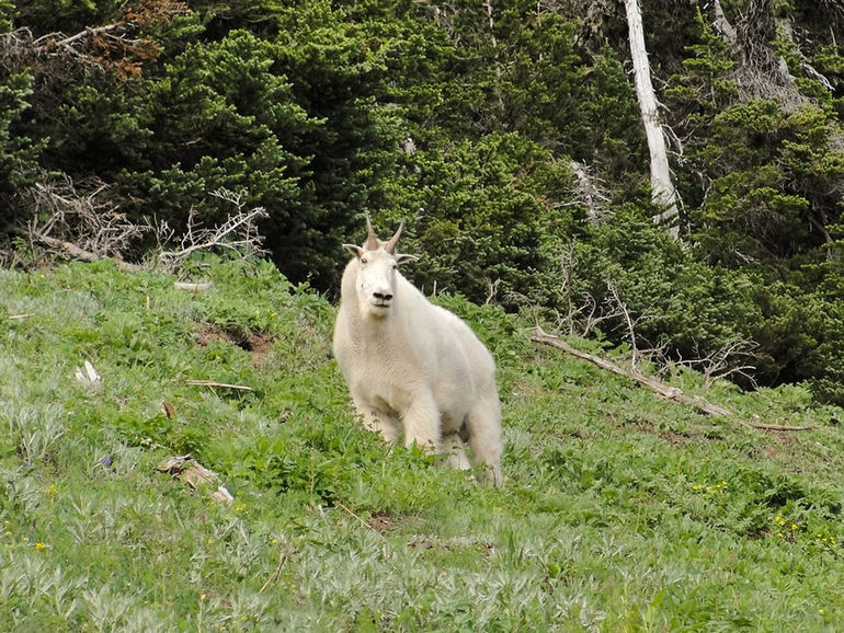Olympic_National_Park_44