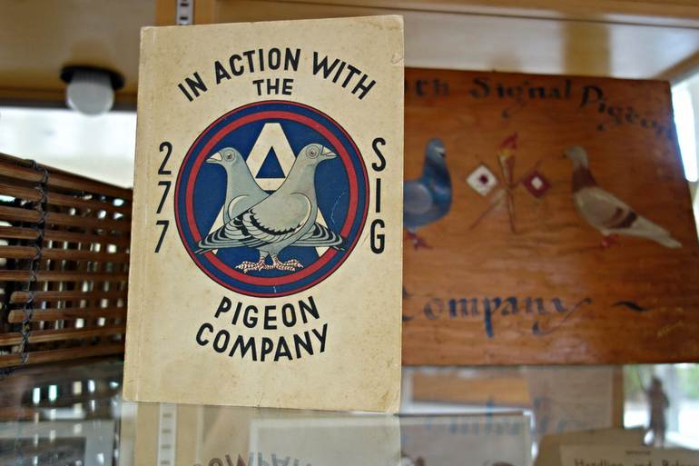 The American Pigeon Museum: американский музей голубей (США)
