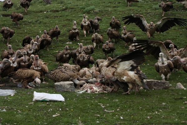 Небесные похороны, Тибет