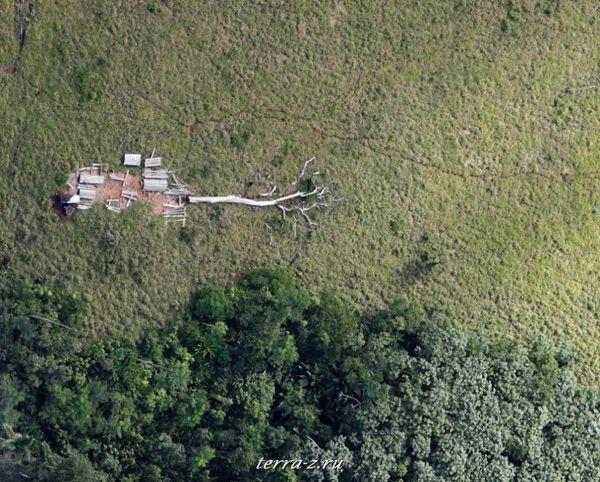 Вырубленные амазонские джунгли рядом в бразильском штате Пара (3 мая 2009 года). AMAZON-CATTLE/ REUTERS/Paulo Whitaker