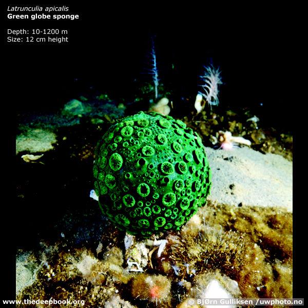 Удивительные существа глубин Мирового океана