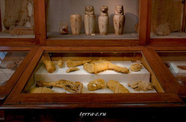 Мумифицированное мясо было подготовлено для пикника фараонов в загробной жизни. Утки, говядина, ребра, жаркое, и даже на суп из бычьих хвостов. Все связанное в бинты и упакованое в тростниковые корзины для погребения в могиле королевы.