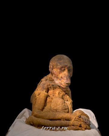 Мумия священного бабуина