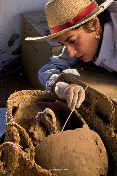 Археолог Салима Икрам расчищает останки ибиса – символ бога Тота – в глиняном сосуде, где его захоронили 2700 лет назад