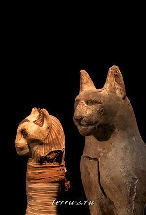Деревянные полые фигурки котов, в которых находятся котячьи тела