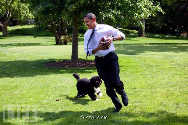 Президент США Барак Обама играет с любимым псом Бо на лужайке возле Белого дома.