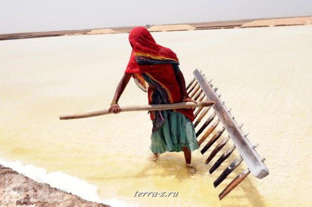 Индийская рабочая собирает соль специальными деревянными граблями в искусственном пруду для выпаривания соли в городе Карагода.