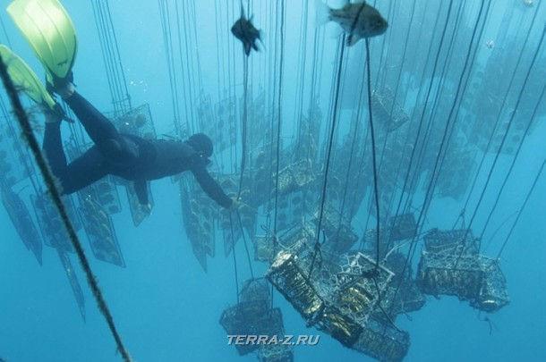 Клетки с устрицами остановлены на глубине 15 метров