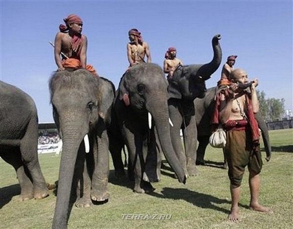 Страна, где слоны играют в футбол (Непал)