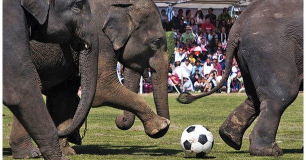 Страна, где слоны играют в футбол