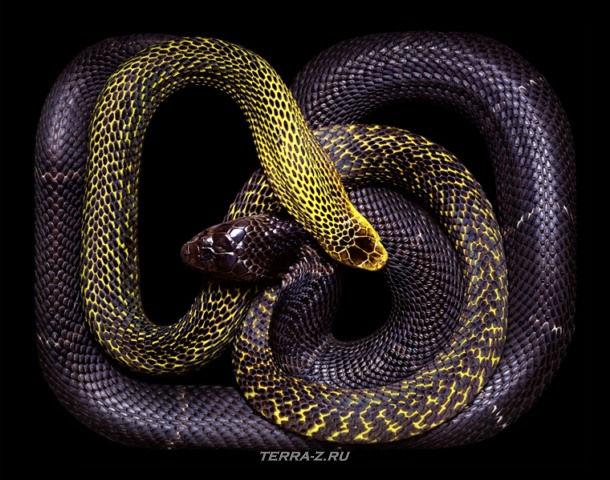Змеи, черепа и натюрморты от Guido Mocafico (Гвидо Мокафико)
