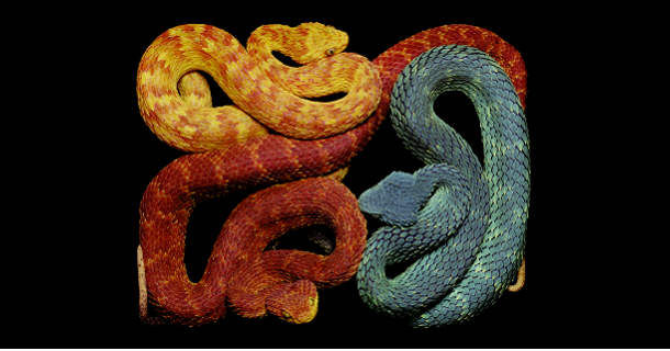 Змеиный арт от Guido Mocafico (Гвидо Мокафико)