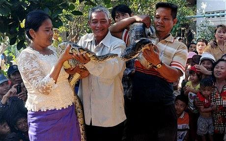 Свадьба питонов (деревня Сит Боу, Камбоджа)