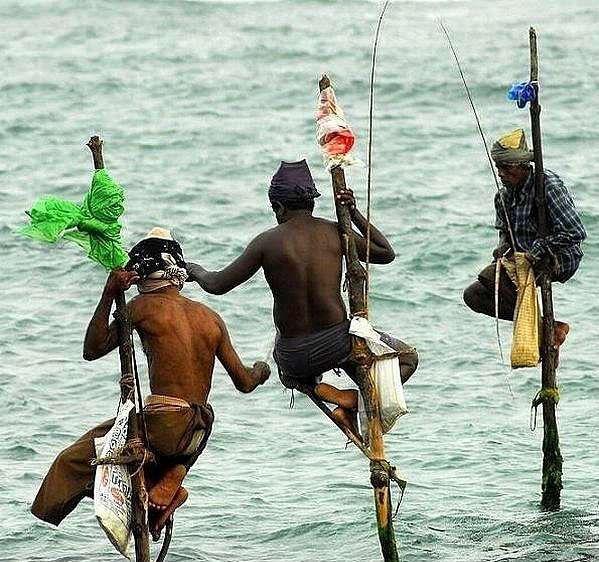 Рыбалка на шестах (Шри-Ланка)