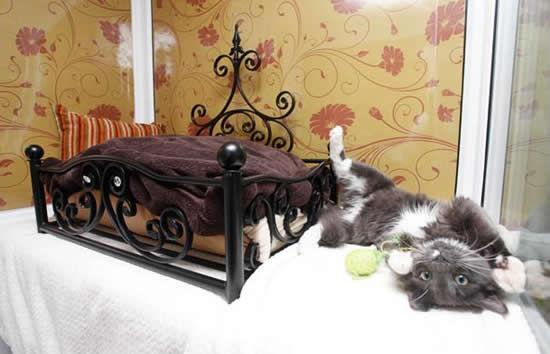 """""""Longcroft"""" - роскошный отель для кошек (Хартфордшир, Англия)"""