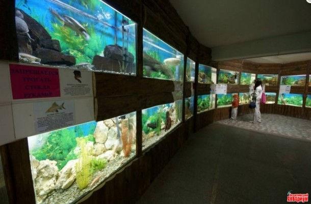 Подводная сказка Алуштинского Аквариума (Крым, Украина)