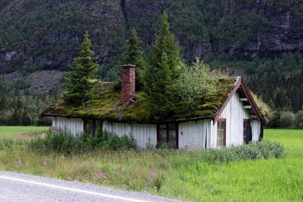 Зеленые крыши Скандинавии