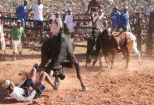 """""""Савика"""" – танец с быком (Мадагаскар)"""