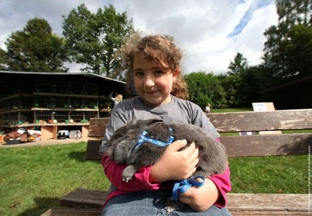 """Состязания кроликов """"Rommerz Rabbit Hopping Competition 2011"""" (Германия)"""