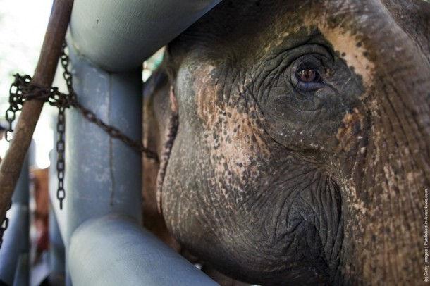 Первая в мире больница для слонов (Лампанг, Таиланд)
