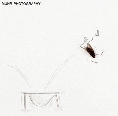 Жизнь мух от Магнуса Михра (Magnus Muhr)