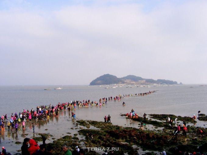 Расступившееся море в Корее (архипелаг Джиндо)