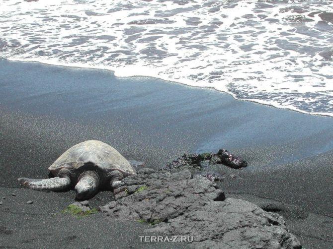 Чёрный пляж Пуналу (Гавайи)