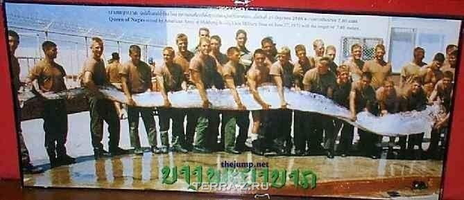 Сельдяной король – самая длинная рыба