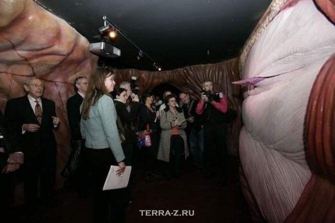 """Музей """"Corpus"""" – путешествие сквозь человеческое тело (Голландия)"""