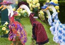 Гусиный парад мод 2012 (Австралия)