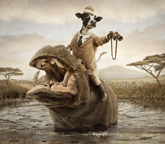 Очаровательные коровы Энди Махра (Andy Mahr)