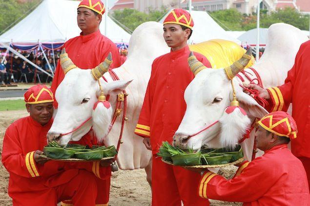 Церемония Королевкой пахоты 2012 (Таиланд)