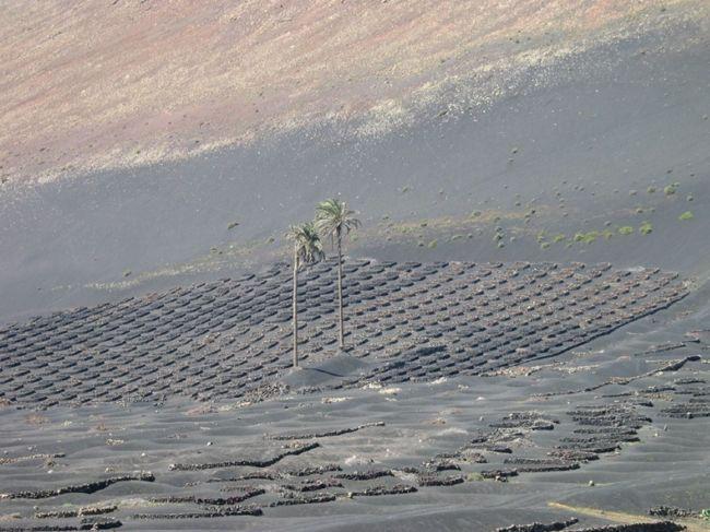 Уникальные виноградники Лансароте (Испания)