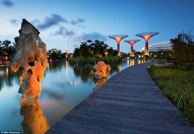 Гигантские деревья ботанического сада Сингапура