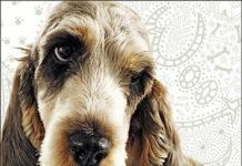 Petite Amande Dog Fragrance: духи для настоящих… собак (Англия)