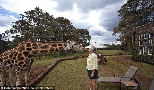 Giraffe Manor: отель, где завтракают с жирафами (Африка)