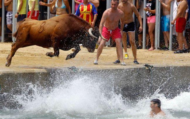 Bous a la Mar: быки в море (Испания)