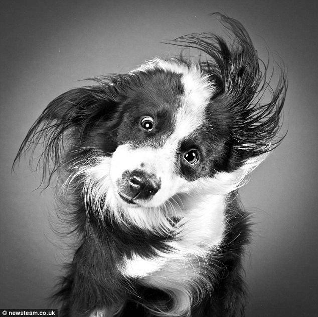 Собачьи портреты в стиле Shake от Карли Дэвидсон (Carli Davidson)