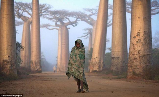 Победители конкурса National Geographic Photo Contest 2012