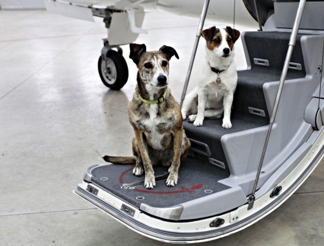 Авиабилет для собак от авиакомпании Виктор, Майорка