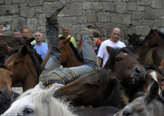 Rapa Das Bestas: укрощение диких лошадей голыми руками (Испания)