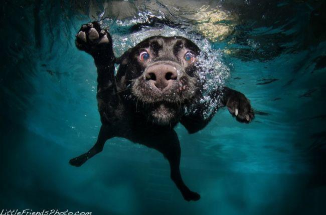 Подводные собаки от Сет Кастил (Seth Casteel)