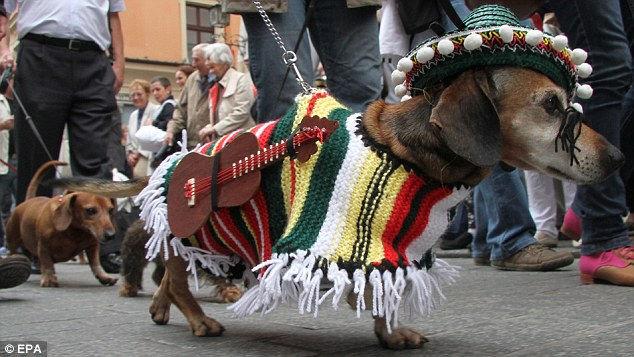 Парад такс 2012 в Польше