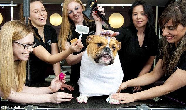 Pet Spa in Harrods: первый в мире спа-салон для собак (Англия)