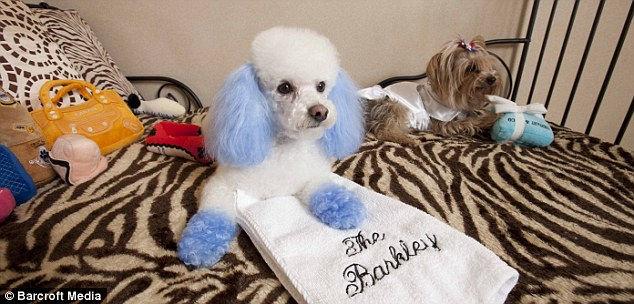 Отель Беркли: эксклюзив для собак и кошек (США)