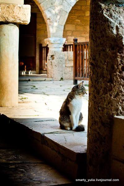 Кошачий монастырь Святого Николая (Кипр)