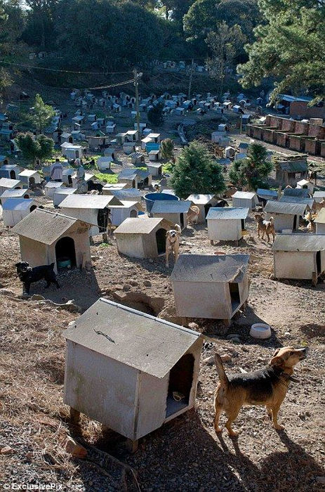 Собачьи трущобы Кашиас-ду-Сул (Бразилия)