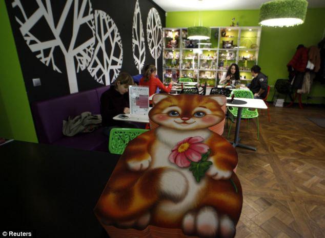 Кошачье кафе в Санкт-Петербурге (Россия)