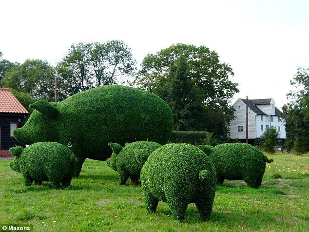 Стив Мэннинг: сделаем из куста животное (Англия)