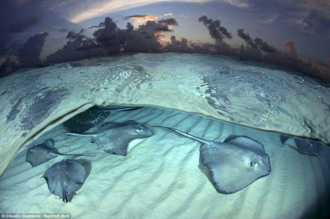 Скаты на Каймановых островах